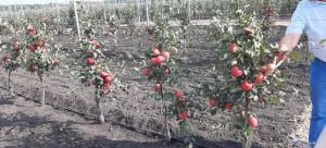 День-садовода-2019-яблони