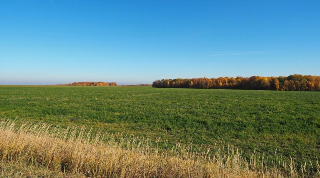 завершен фитосанитарный мониторинг федеральных земель
