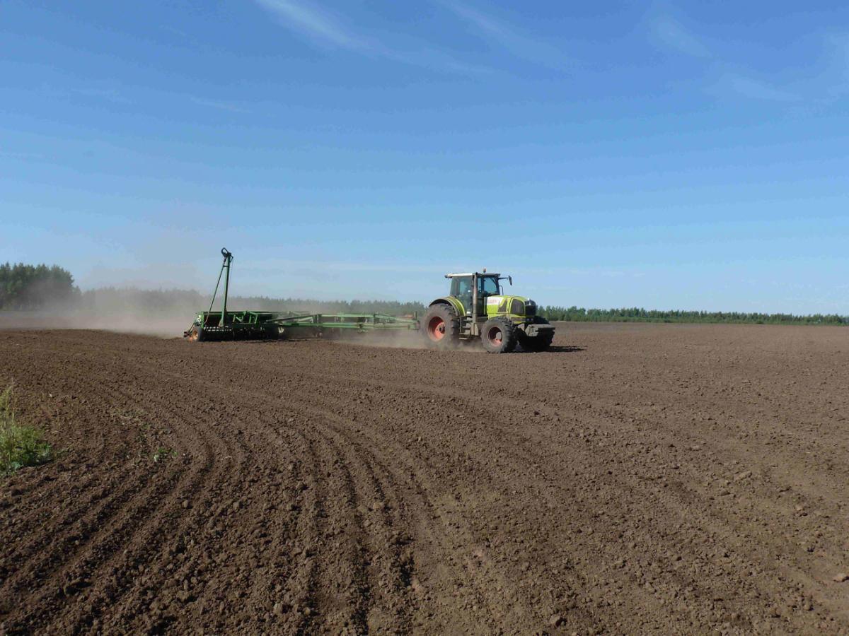 Итоги сева В Курской области
