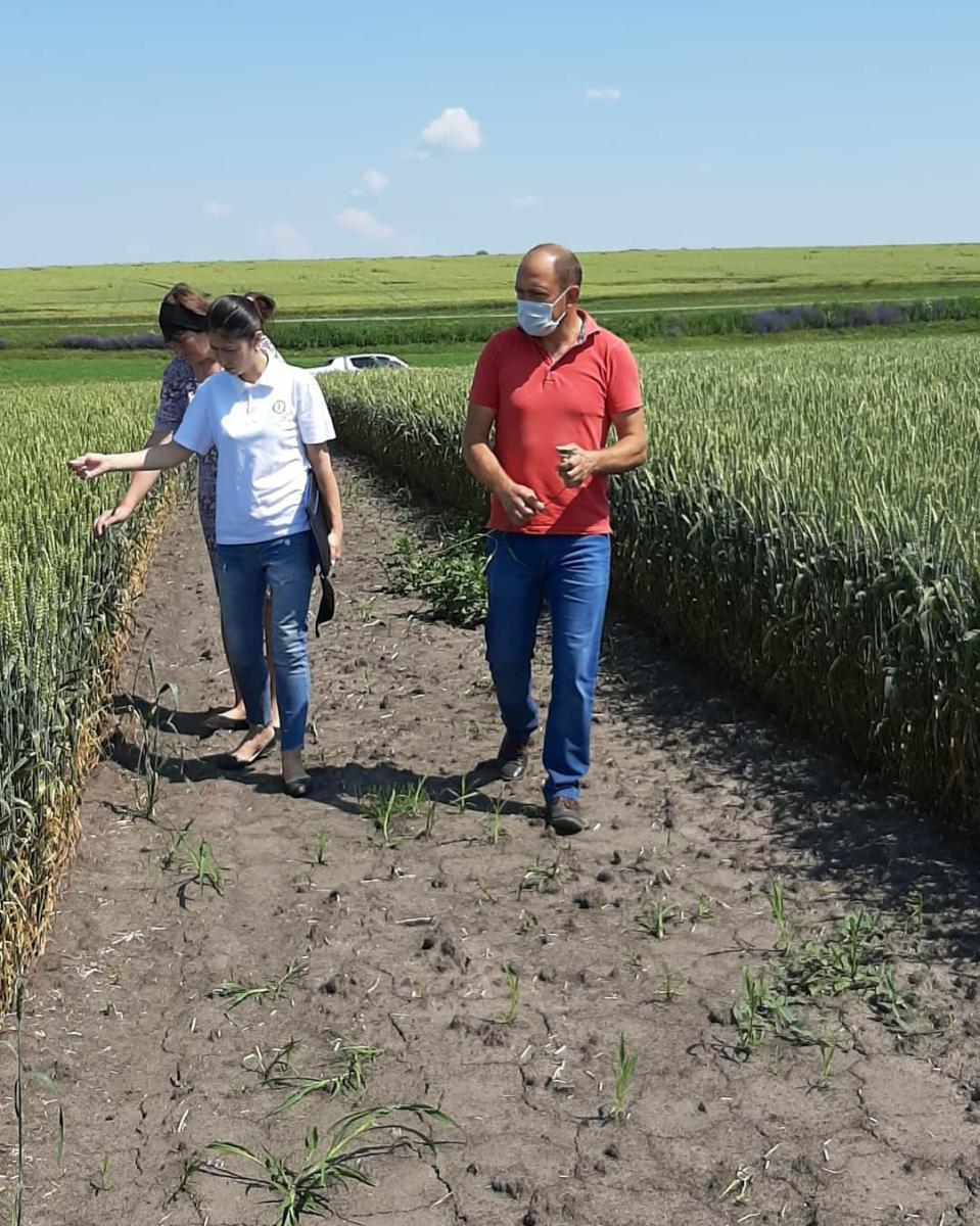 Предапробационный осмотр семенных посевов в сертифицированных семеноводческих хозяйствах